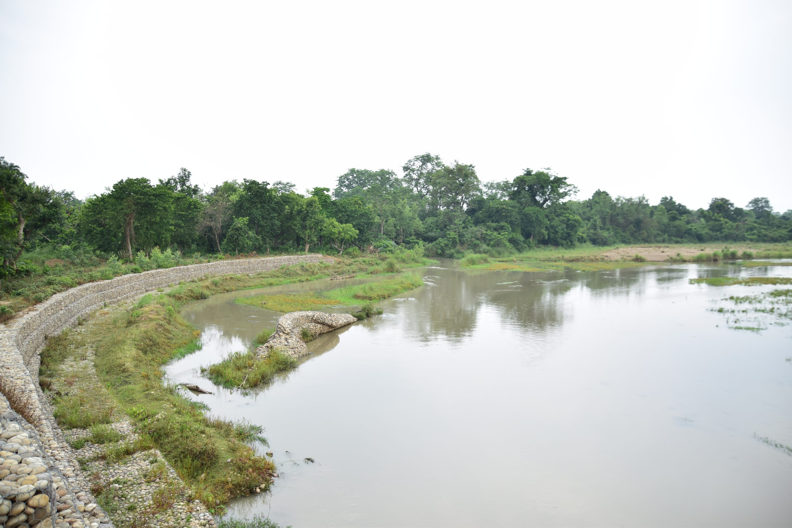 Natural embankments are saving many farmlands from convering to wasteland in flood plains